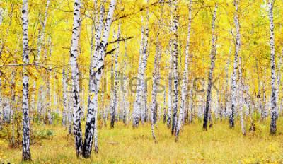 Nálepka březový podzimní les