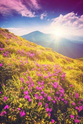 Nálepka Bright Carpathian ráno