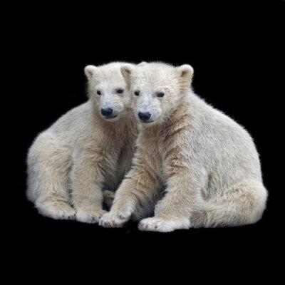 Nálepka Brotherhood of polární medvíďata