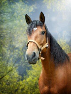 Nálepka Brown kůň na jaře krajině