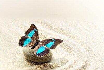 Nálepka Butterfly Prepona Laerte na písku