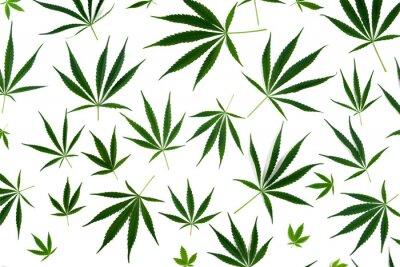 Nálepka Cannabis leaves of different sizes are isolated on a white background.