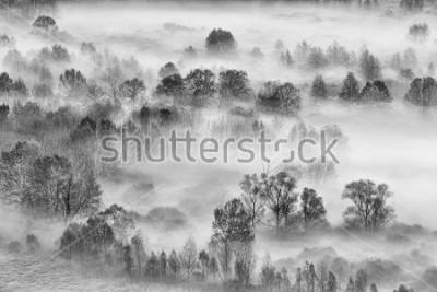 Nálepka Černá a bílá krajina, mlhavý les, Itálie