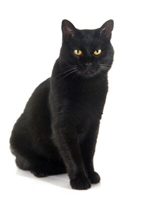 Nálepka Černá kočka
