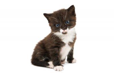 Nálepka černé a bílé kotě izolované