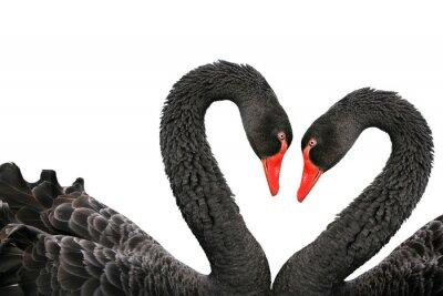 Části černé labutě