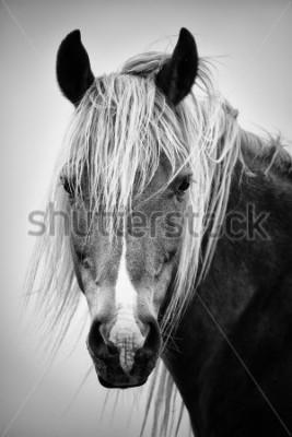 Nálepka Černý a bílý portrét koně