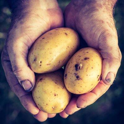 Nálepka Čerstvá zelenina v ruce