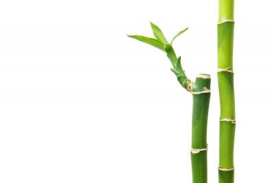 Nálepka Čerstvé bambus izolovaných na bílém pozadí