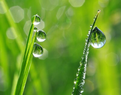Nálepka Čerstvé trávy s kapkami rosy zblízka