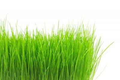 Nálepka Čerstvé zelené trávě