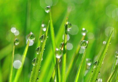 Nálepka Čerstvé zelené trávy s kapkami rosy detailní. Příroda na pozadí