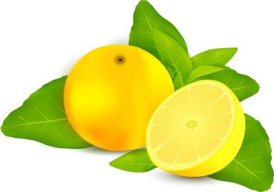 Nálepka Čerstvých citronů s listy bílém pozadí