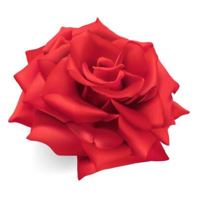 Nálepka Červená růže. Ručně kreslenými vektorové ilustrace červená růže, královna růže, symbol lásky, odvahy, soucitu.