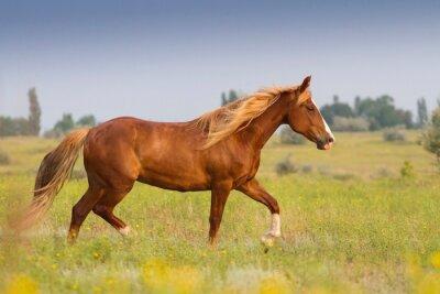 Nálepka Červený kůň s dlouhou hřívou