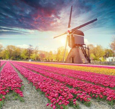 Nálepka Cesta vede k holandským větrným mlýnám z kanálu v Rotterdamu. Holandsko. Nizozemí