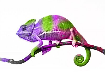 Nálepka chameleon - barvy