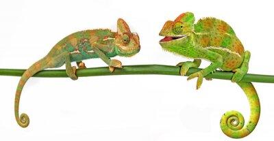 Nálepka Chameleoni