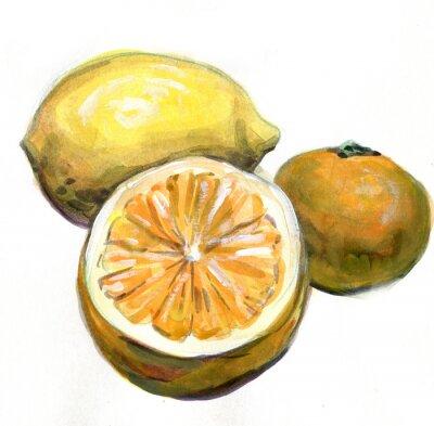 Nálepka Citrusové plody. akvarelu