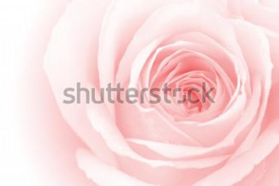 Nálepka closeup barevné růží na pozadí