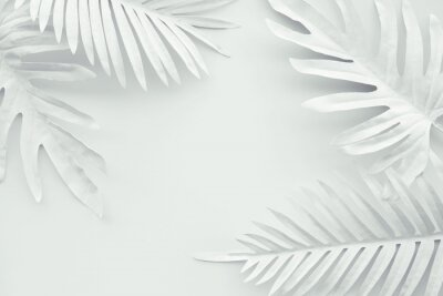 Nálepka Collection of tropical leaves,foliage plant in white color with space background.Abstract leaf decoration design.Exotic nature art