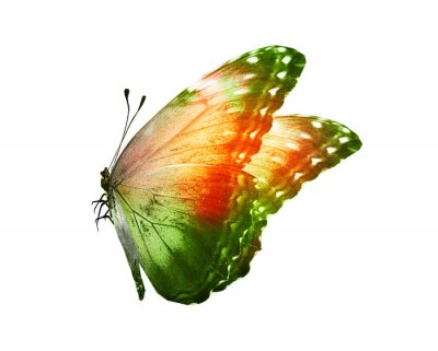 Nálepka Color butterfly , isolated on white background