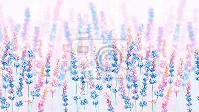 colorful lavender