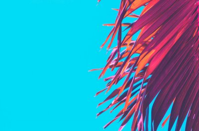 Nálepka Copy space pink tropical palm tree on sky abstract background. Summer vacation and nature travel adventure concept.