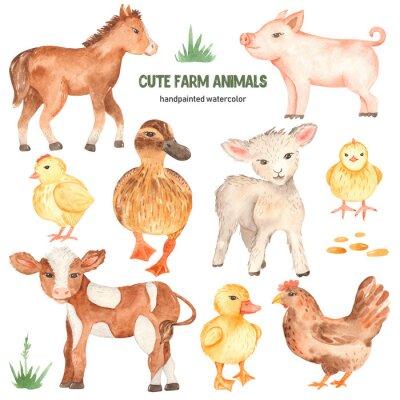 Nálepka Cute farm animals horse, pig, lamb, calf, duck, duckling, watercolor chick