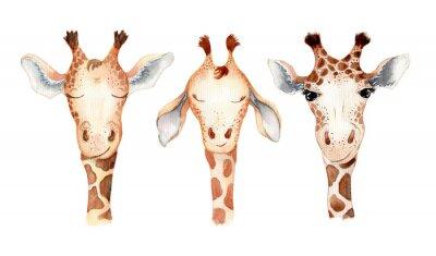 Nálepka Cute giraffe cartoon watercolor illustration animal set