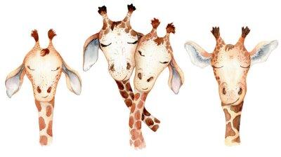 Nálepka Cute giraffes couple cartoon watercolor illustration animal set