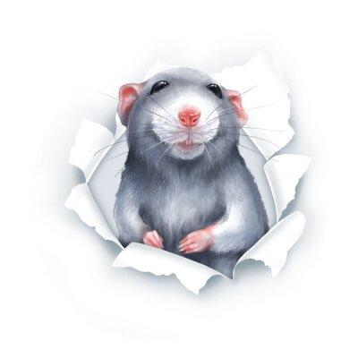 Nálepka Cute gray cartoon rat, paper breakthrough, digital painting