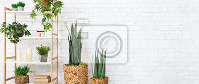 Nálepka Decorative home plants concept