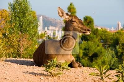 Deer, kterým se na kopci
