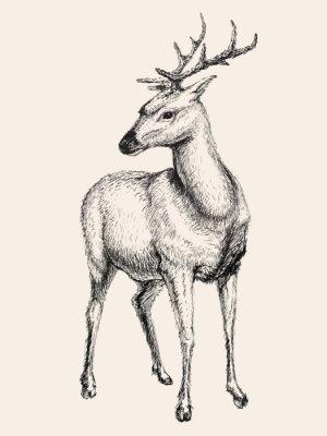 Nálepka Deer vektorové ilustrace, hand drawn, skica