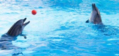 Nálepka Delfíni hrát kuličky