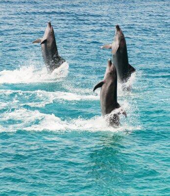 Nálepka delfíni skákaví