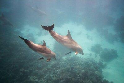 Nálepka Dolphin pod vodou