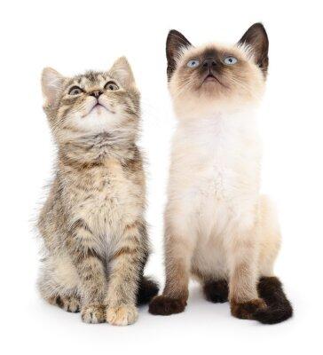 Nálepka Dvě malá koťátka