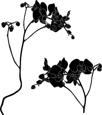 Nálepka dvě větve orchidej náčrty na bílém