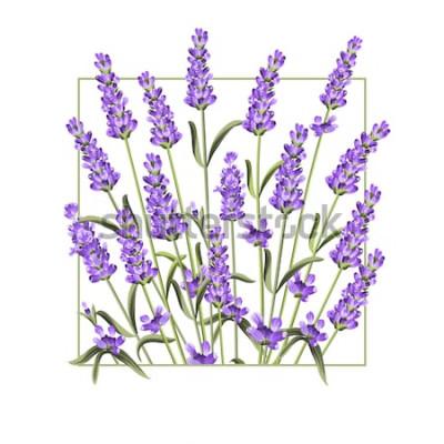 Nálepka Elegantní karta s květy levandule. Rám levandule obdélník a text léto. Levandulový rámeček pro textovou prezentaci. Vektorové ilustrace.