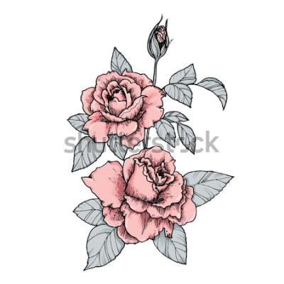 Nálepka Elegantní viněta s růžovými růžemi. Ručně kreslenou izolované vektorové ilustrace v retro stylu