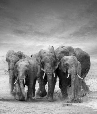 Nálepka Elephant