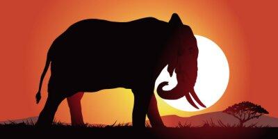 Nálepka Elephant-couche de soleil
