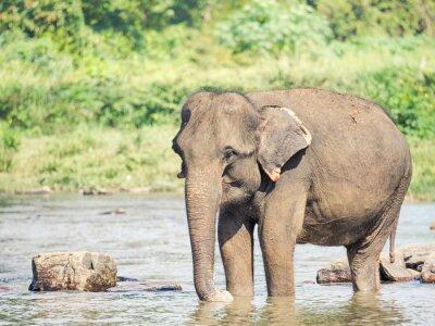 Nálepka Elephatnt