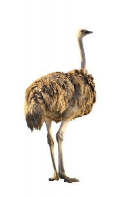 Nálepka emu