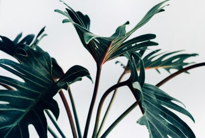 Nálepka Exotické tropické xanadu listy na bílém pozadí. Přírodní koncepty
