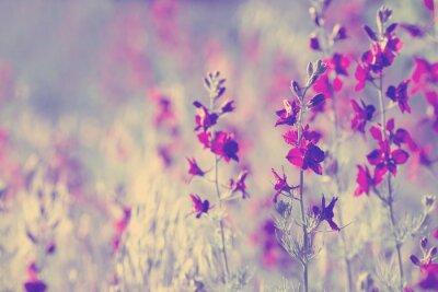 Nálepka fialové divokých květin