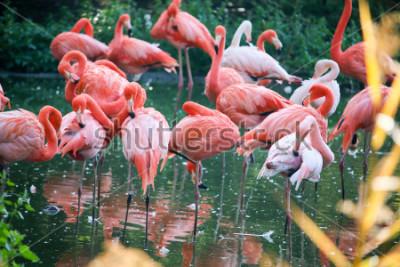 Nálepka flamingo on the pond