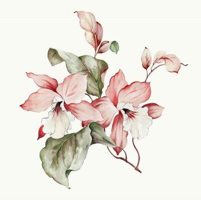 Nálepka Flowers watercolor illustration.Manual composition.Big Set watercolor elements.